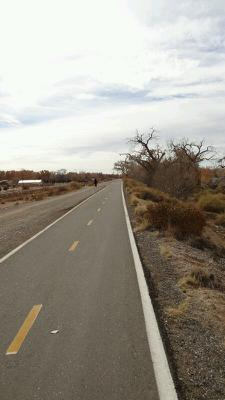 The Bosque trail runs from Corrales to Central, in downtown Albuquerque